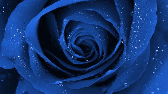 Die Vision der Blauen Blüte - eine BlütenIDEEologie