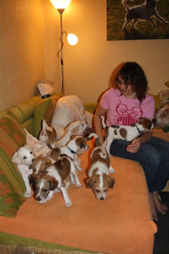 Es ist jetzt schon die 8. Lebenswoche der Welpen - abends dürfen sie mit auf die Couch!
