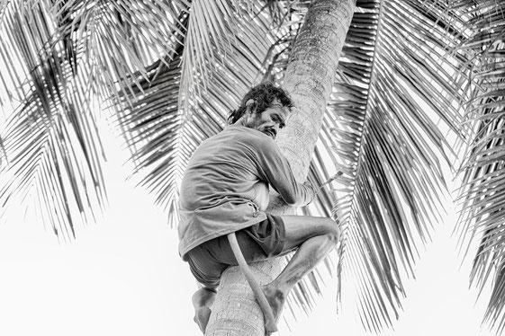palmen-kletterer