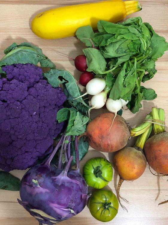 Lila Blumenkohl und Kohlrabi, grüne Tomaten, goldene Bete, weiße Radieschen, gelbe Zucchini  - der perfekte bunte Mix für Gemüsesteaks und -schnitzel.