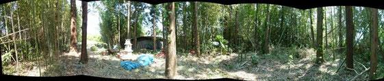 伐採が進んだ竹林パノラマ
