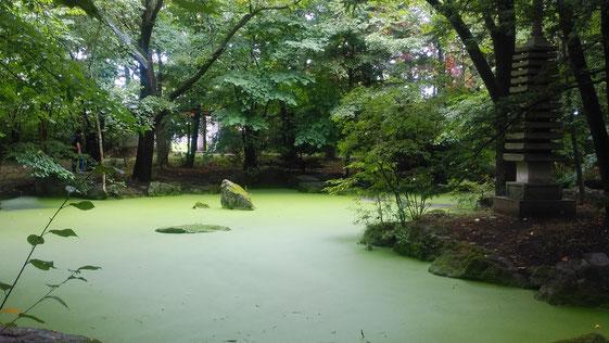 Mさんより、苔が美しい帯広神社の神池