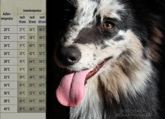 Dogcoach, Hitzetod, Auto und Hund