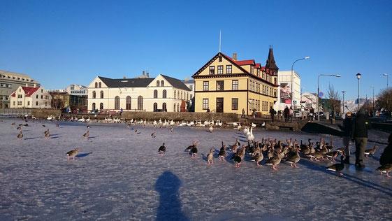 Stadtsee,Tjörnin,island,winter,reykjavik,reisetipps,tipps,februar,zwei,wochen
