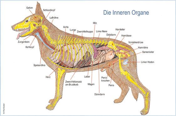 Zuzwil - Schaeferhund.ch