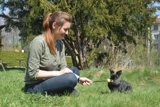 Tricktraining, Tiertraining, Tierverhaltenstraining, Animal Train, Sarah Unterberger