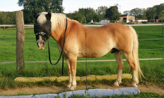 Mein Equikinetic-Pony :-)