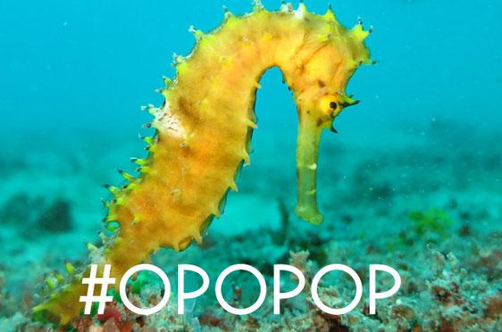 vacances miméthik, #OPOPOP, hippocampe, crédits imageThinkstock