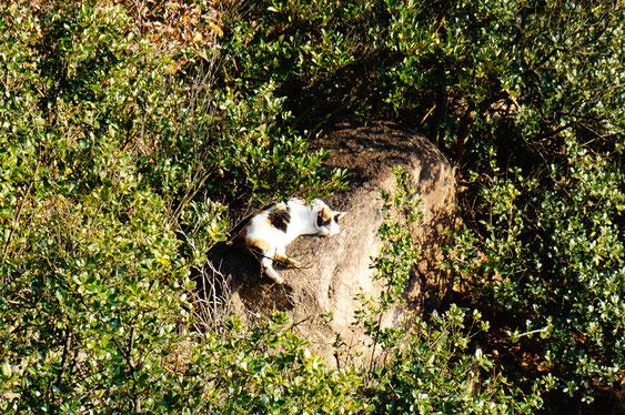 三毛猫。のんびり~