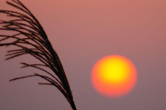 今日の瀬戸の夕日です。当院からの帰りは是非夕日鑑賞へ。