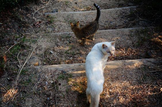 野良猫、ネコ、児島