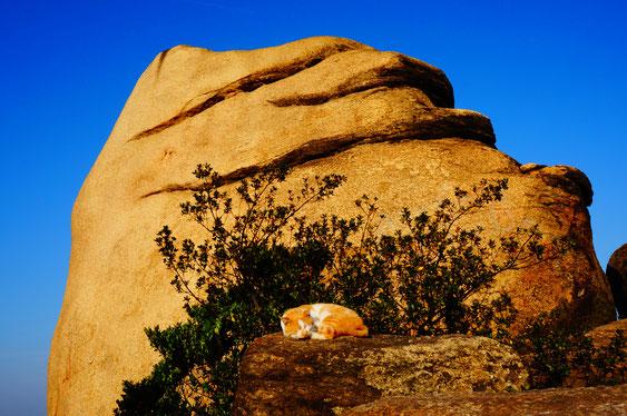 絵になる、かわいすぎる猫。岩と同じ茶色!