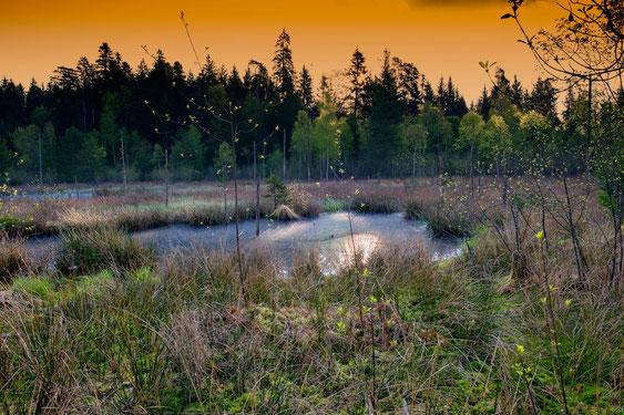 Das ist eine Naturfoto im Wohler Wald