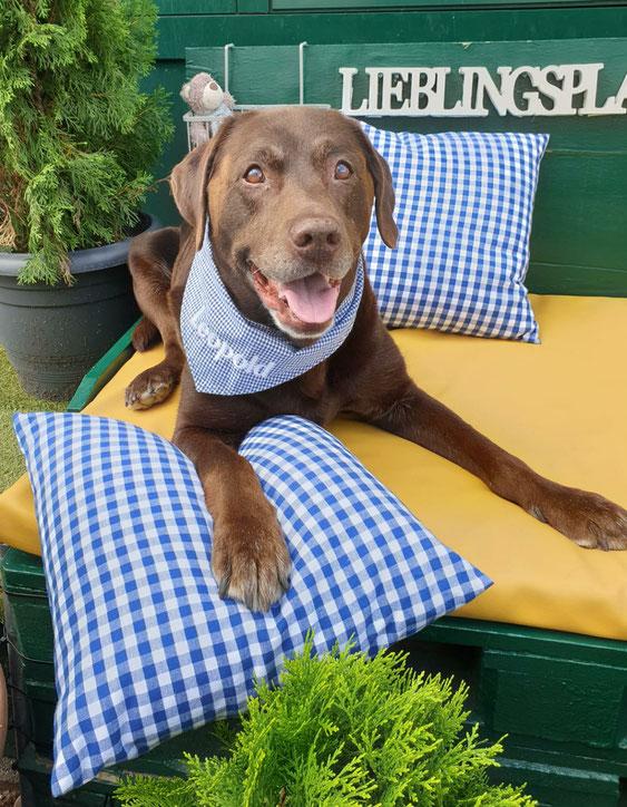 MK-EXKLUSIVE orthopädische visco Hundematratzen