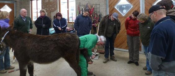 """25. und 26.5.2013: Workshop über Eselhaltung von den """"Ieselsfrënn Letzebuerg"""""""