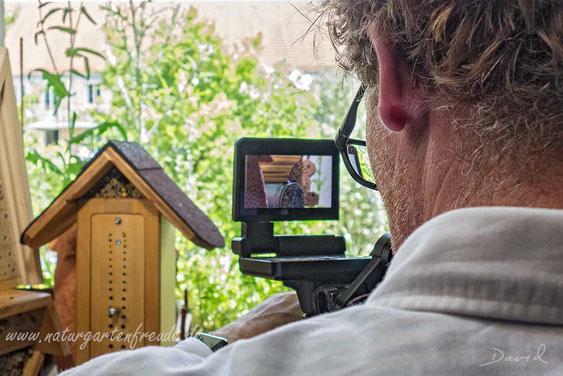 Naturgartenbalkon Balkon Sendung Querbeet