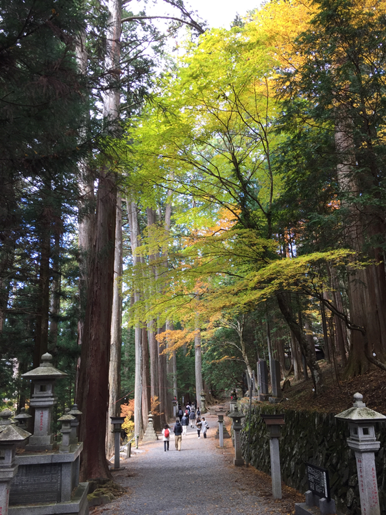 本殿に向かう参道は、ハッとするくらい神秘的で美しかったです
