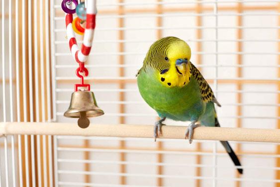vogelbedarf vogelzubehör