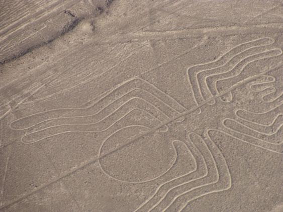 Peru, Nasca Linien - Die Spinne