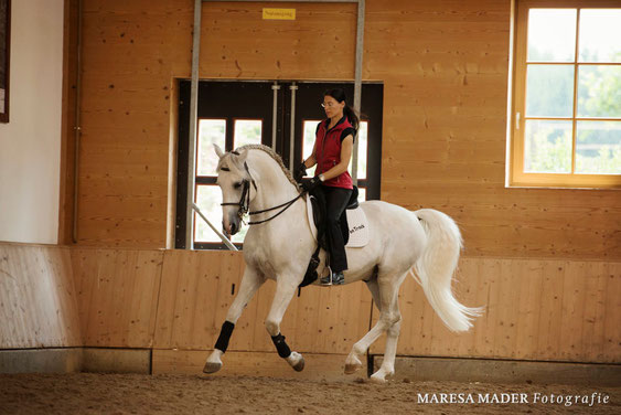 "Anja Beran and Lipizzan stallion ""Favory Toscana"""