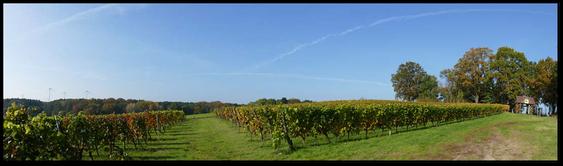 Weinberg vom Weingut Patke in Grano bei Guben