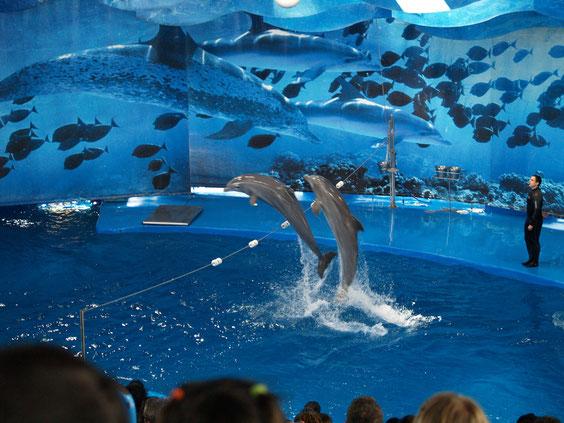 Зоопарк Барселоны, дельфинарий Барселоны