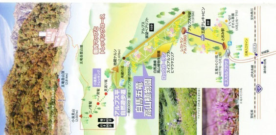 白馬五竜高山植物園