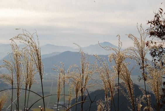 日野山、三里山、枯れすすき・・・秋の終わりを感じます
