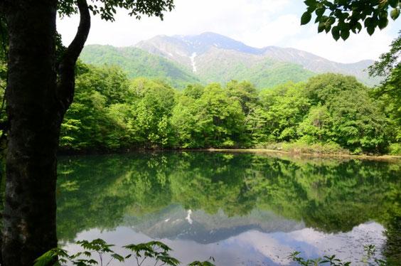 新緑の刈込池と三ノ峰
