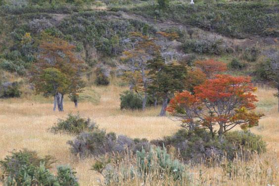 Couleurs d'automne en Patagonie