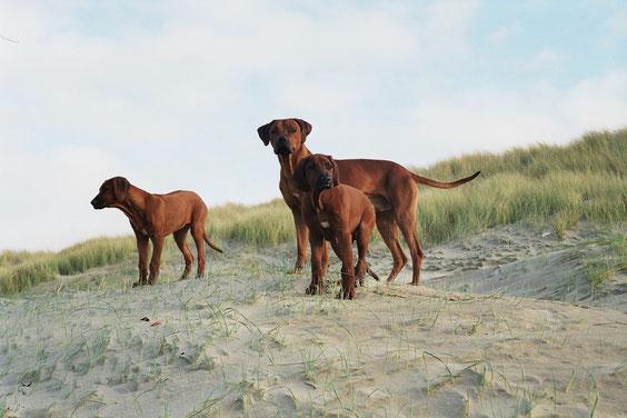 Pino mit Klein Aluna und Abutambu in Holland am Meer 2005....