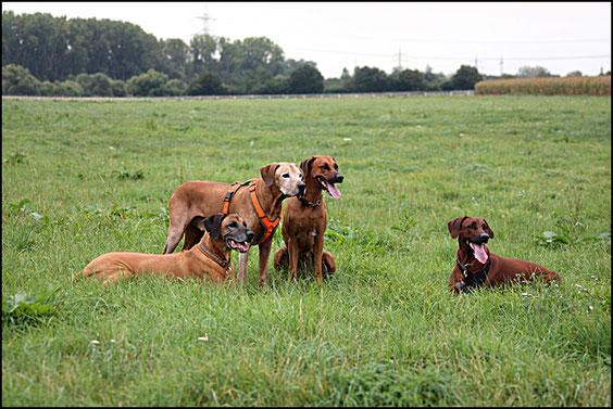 von links Chumo, Pino, Pebbles & Nela (klickt auf das Bild!)