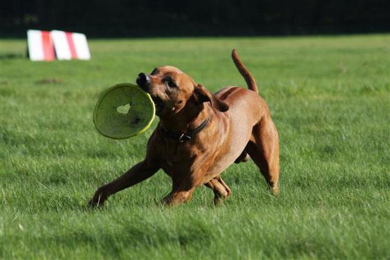 Pinchen mit Frisbee