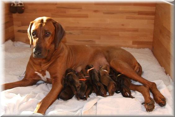 Luni mit ihren ersten 10 Kindern.....