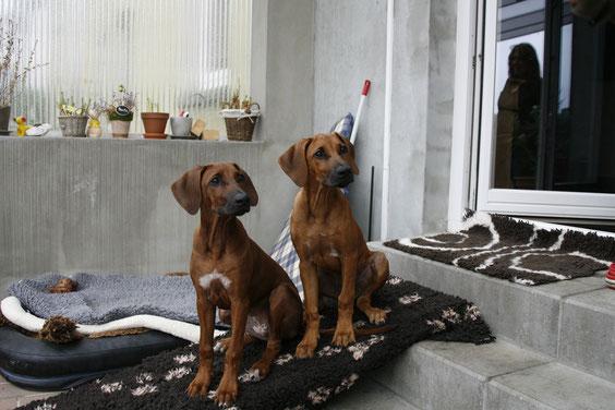 Nela & Pebbles ... schon im wurf waren sie immer zusammen... Klickt auf das Bild!!!!