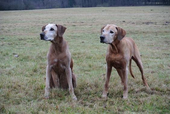 Gheila & Pino ... alte Liebe rostet nicht ....