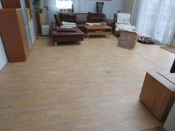 Unser Wohnzimmer ist wieder leer; Wurfkiste und Welpenauslauf wieder abgebaut