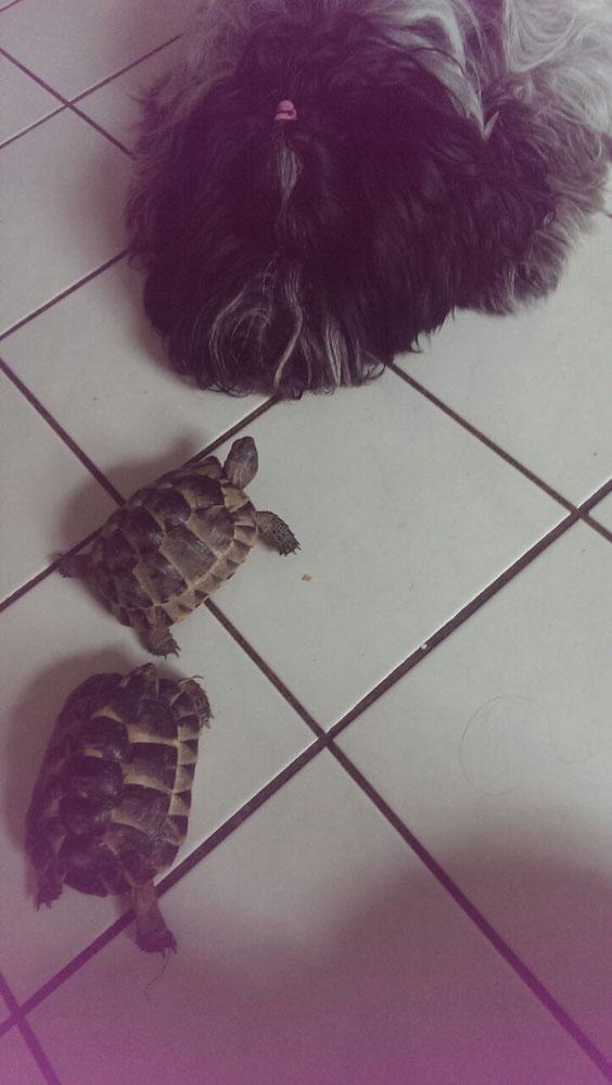 19.07.2015 Flocke hütet Schildkröten