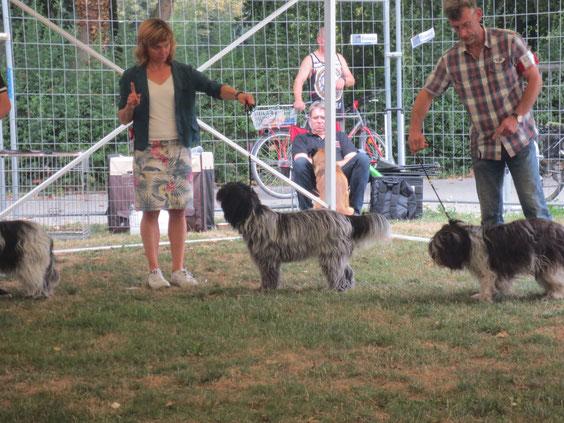 09.08.2015 Emma auf ihrer ersten Ausstellung CACIB Ludwigshafen  V1, JCAC, bester Junghund