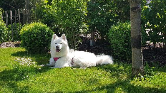 Shyra 14 Monate alt