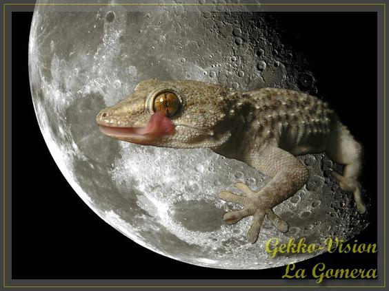 Gomeragecko im  Mond Tarentola gomerensis  © Henner Riemenschneider Gekko-Vision La Gomera