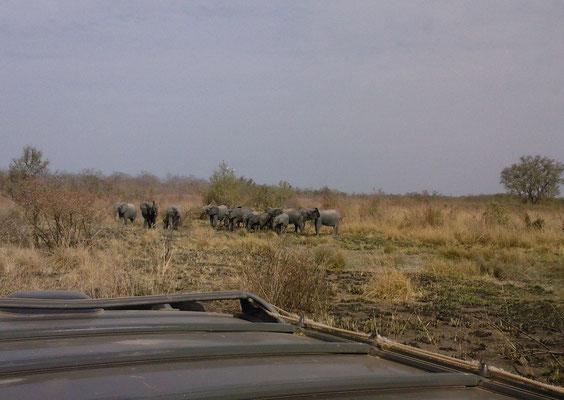 Dans la Pendjari Sam.26 Février 2011, à 50 ou 60 mètres des éléphants.