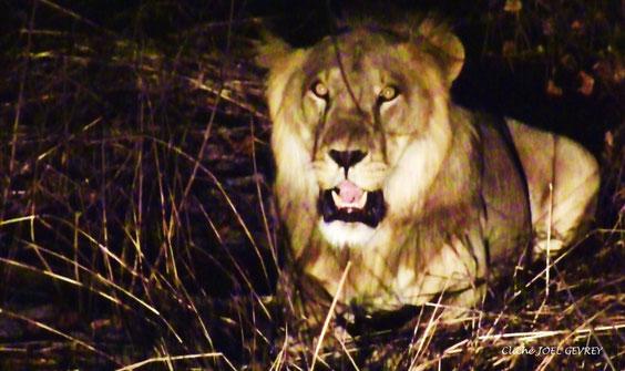 Dans la Pendjari dans les phares du 4X4 le 26 Février 2011.