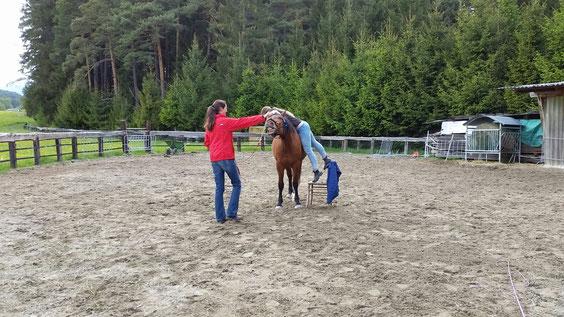 Erstes Gewichtsverlagern auf den Rücken des Pferdes