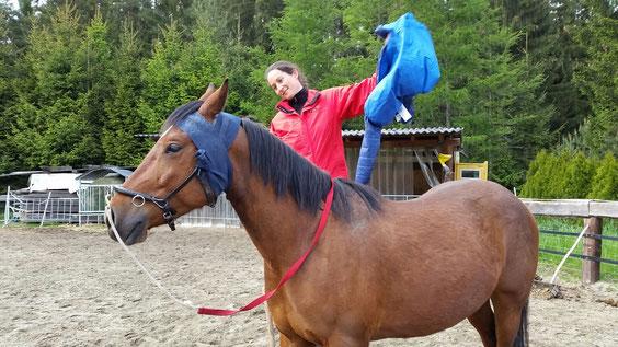 Vorbereitung des jungen Pferdes durch Einflüsse oberhalb seines Rückens