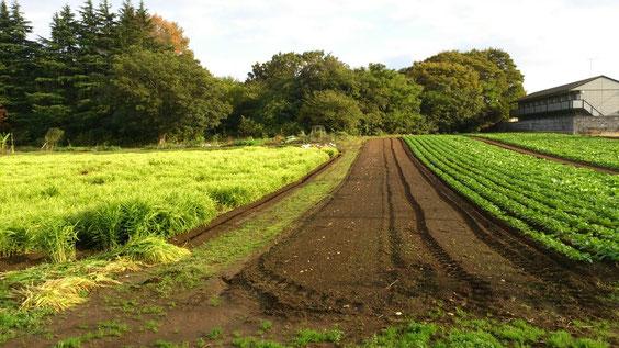 ◆八街の畑。  千葉県