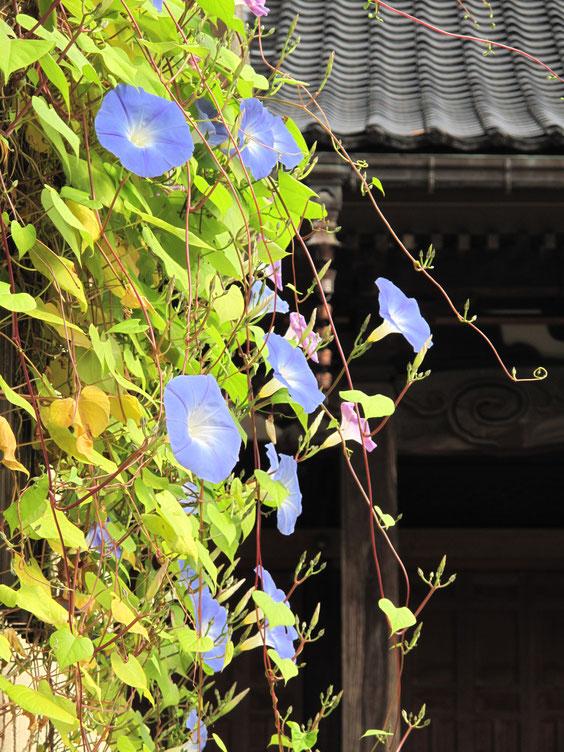 ◆富山県高岡市のお寺にて。