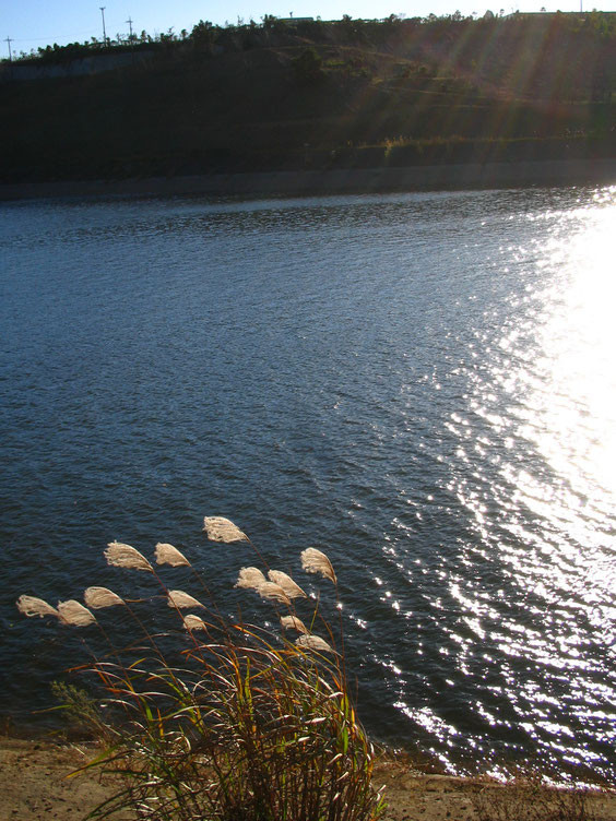 ◆長柄湖 千葉県