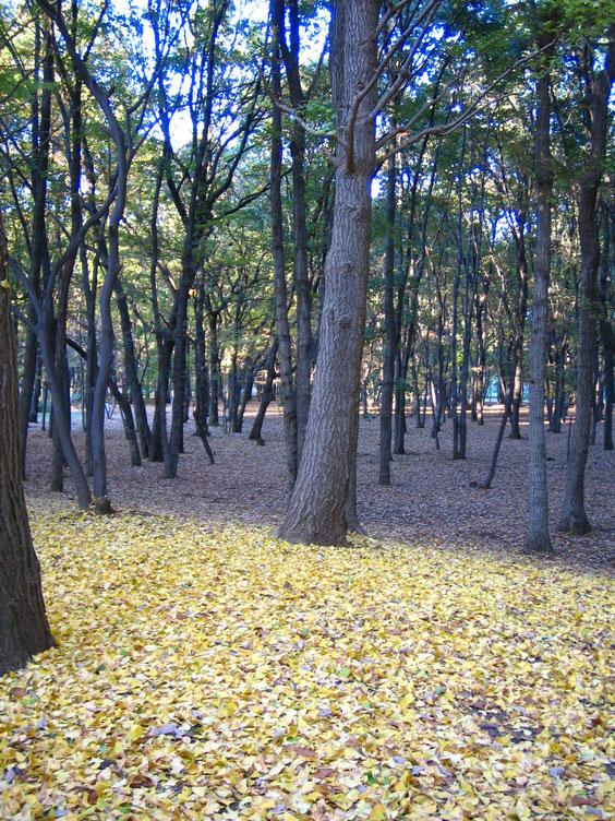◆東京都 野川公園