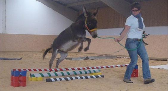 Workshop Bodenarbeit und Zirkustricks mit Eseln am 16. und 17.07